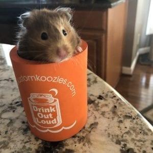 Hamster in a koozie